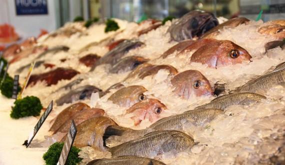fishmarket-rows-of-fresh-fish